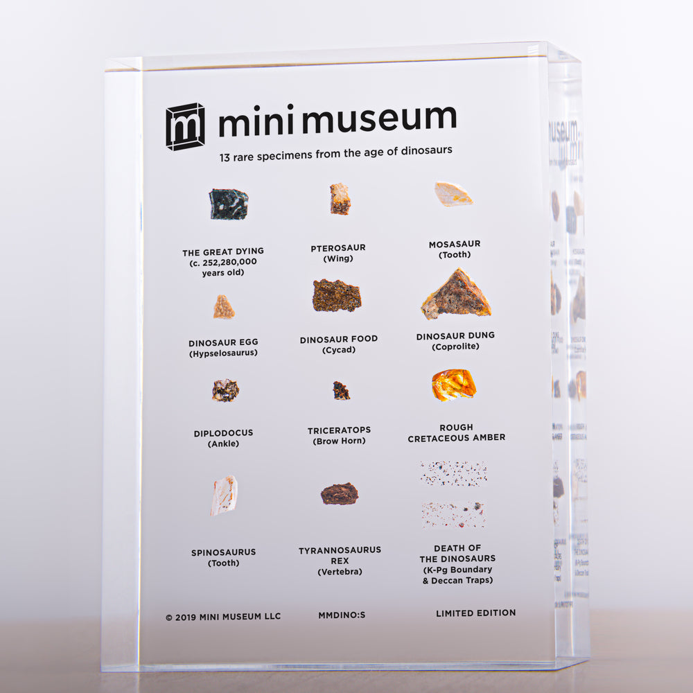 Mini Museum - Age of Dinosaurs (SMALL - 13 Specimens)