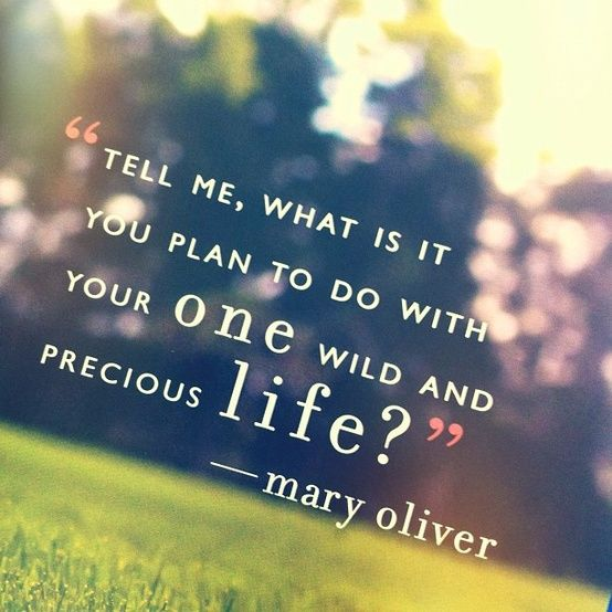 mary oliver one wild and precious life