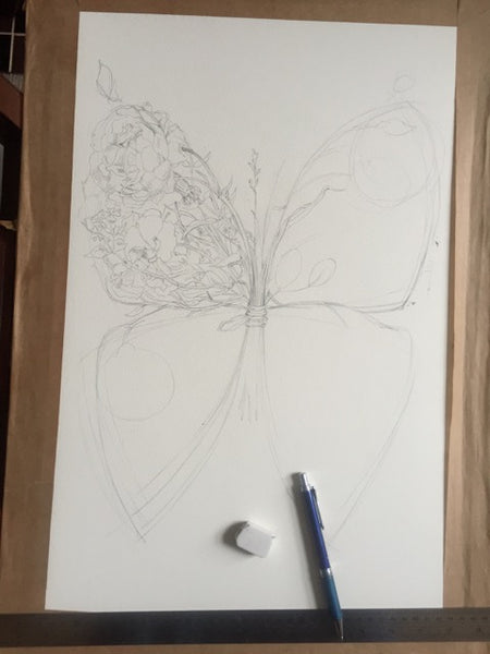 Butterfly Drawing Daniel Mackie The DM Collection