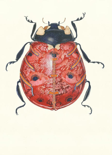 Ladybird watercolour By Daniel Mackie at The DM Collection