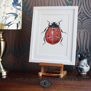 Ladybird  - Print - The DM Collection