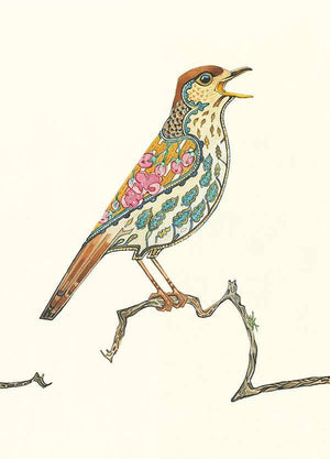 Song Thrush- Card