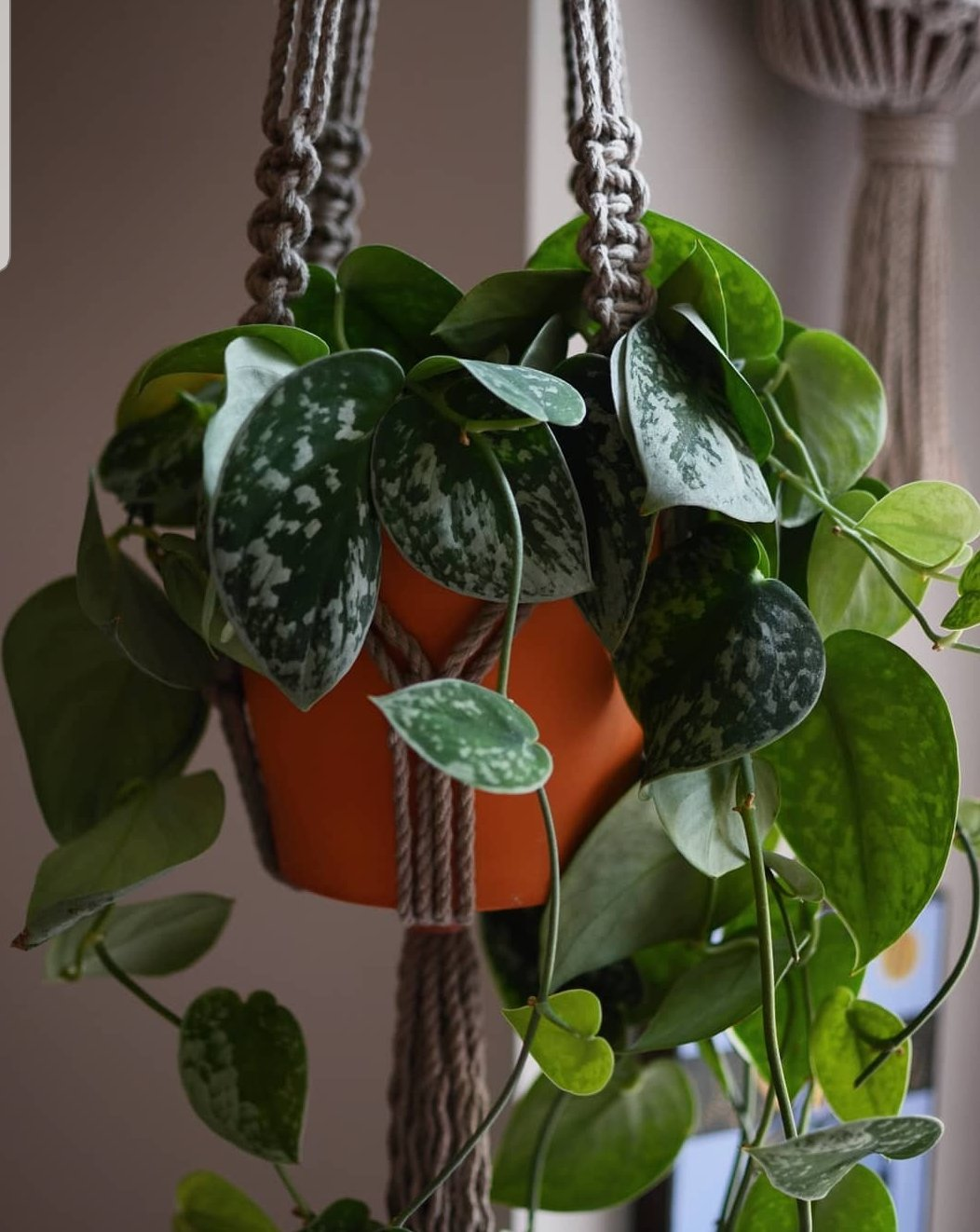 Macrame Wall Plant Hanger Coffee