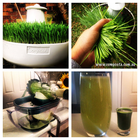 worm farm wheatgrass