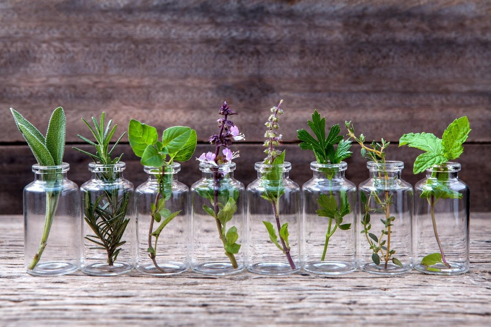 NATURAL SKIN CARE FEATURE: THE TOP PLANT EXTRACTS YOU SHOULD BE USING