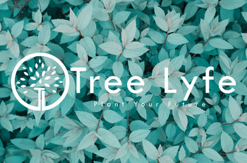 Tree Lyfe Sticker