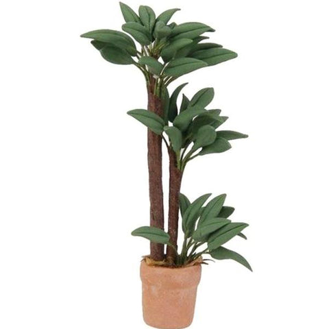 miniature plant 'bamboo palm' in terracotta pot