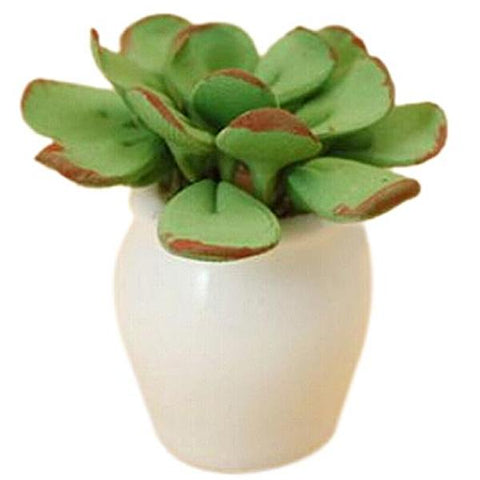 miniature plant 'leafy white pot' - the-tangerine-fox