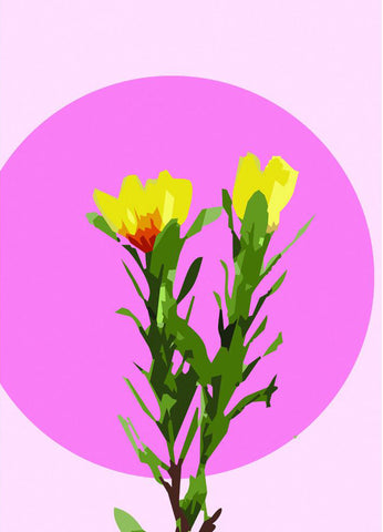 studio cockatoo art print 'colour pop native leucadendron' A4