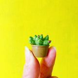 miniature succulent 'hard pvc' 5 set