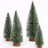 miniature 'white cedar tree' medium 20cm