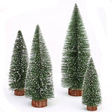 miniature 'white cedar tree' small 10cm
