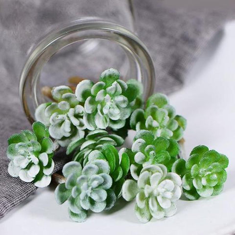 miniature succulent 'light green' loose