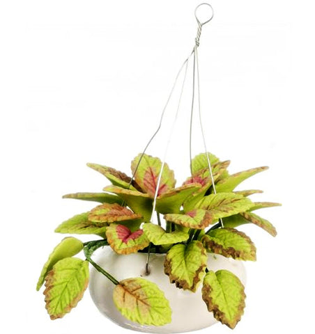 miniature 'hanging plant' variegated leaves
