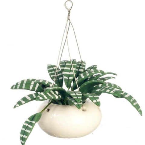 miniature 'hanging plant' green & white leaves