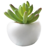 magnet 'potted succulent' echeveria - the-tangerine-fox
