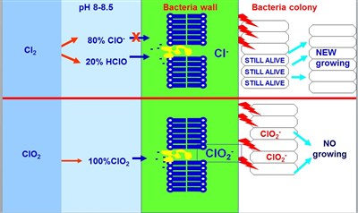 Chlorine vs. Chlorine Dioxide different features against biofilm growth
