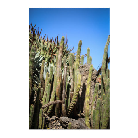 Prickly Fine Art Photographic Print
