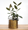 Brass Finish Metal Planter