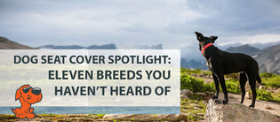 Dog Seat Cover Spotlight: Eleven Breeds You Haven't Heard Of
