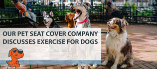 Our Pet Seat Cover Company Discusses Exercise for Dogs