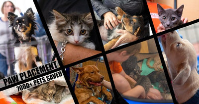 September 2020 Charity Spotlight: Paw Placement
