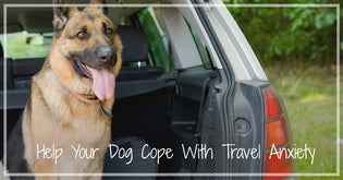How To Prevent Travel Anxiety in Dogs Part 1