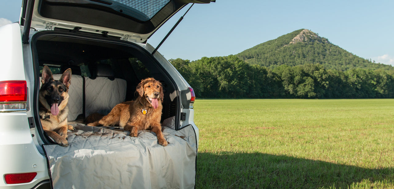 dogs on cargo liner in field