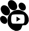 4Knines on YouTube
