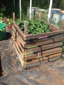 LYNX Hooks potato planter box
