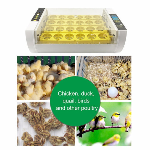 24 Eggs Incubator panel egg tray 60W Automatic Poultry Chicken Duck Eggs Hatcher Machine US 110V EU/UK 220V Newset