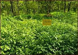 One of Kottakkal's Herbal Gardens
