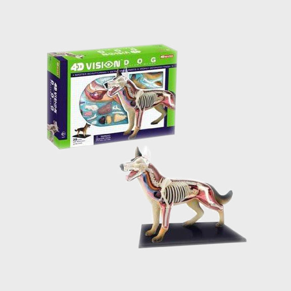 4D Dog Anatomy Model