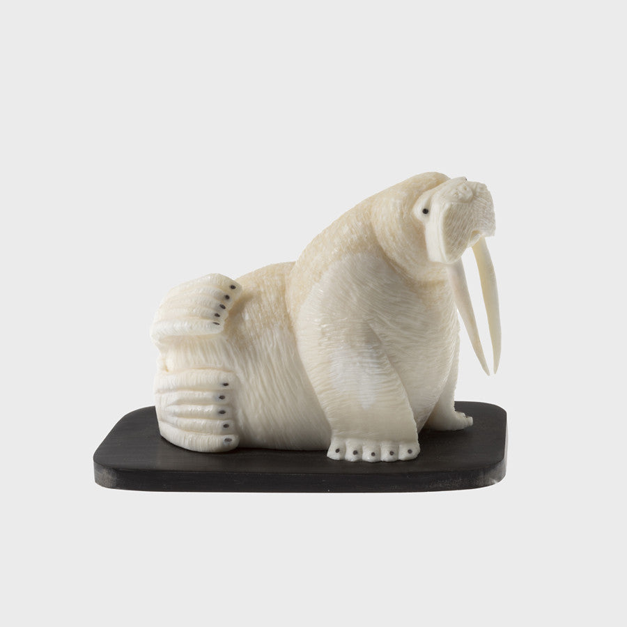 Ivory Walrus on a Baleen Base