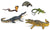 Reptile Animal (set of 5)