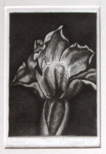 Tulip Floral Art Etching