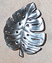 Philodendron Knobs