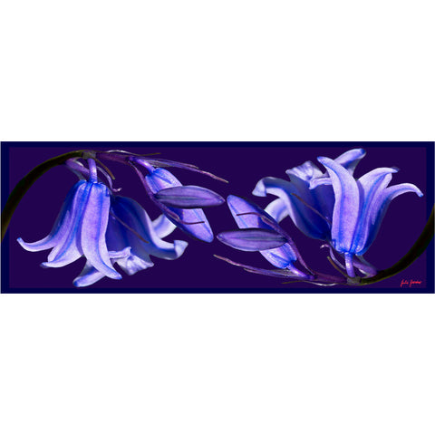 Blue Bells Silk Scarf