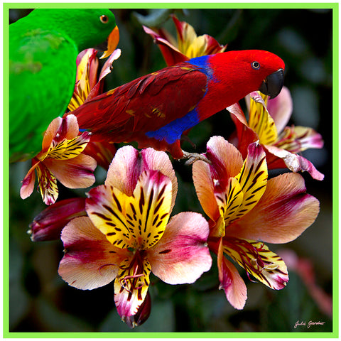 Parrots on Flowers – Satin Silk