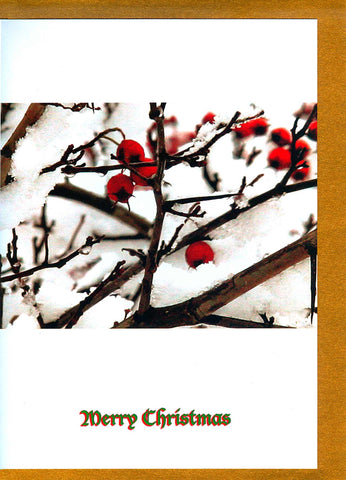 Red berries on tree covered with snow