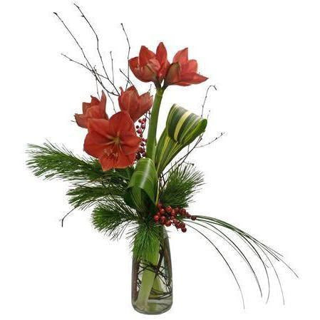 Amaryllis Beauty - NE Flower Boutique