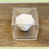 Preserved Rose in acrylic box - NE Flower Boutique