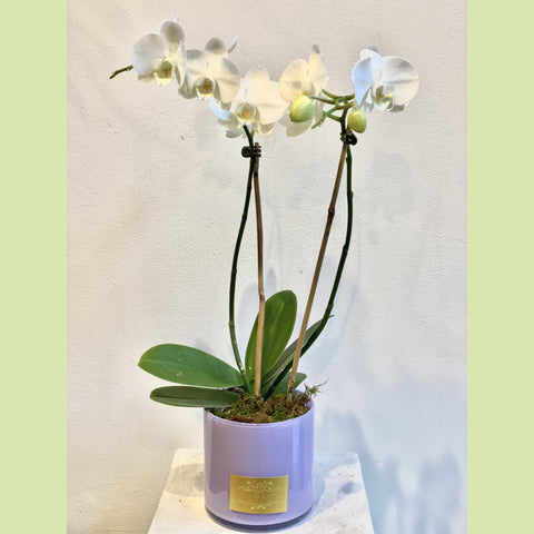 Orchid White - NE Flower Boutique