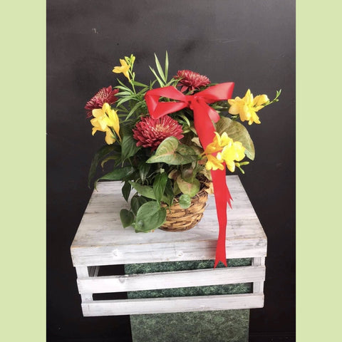 Basket with plants and flowers - NE Flower Boutique