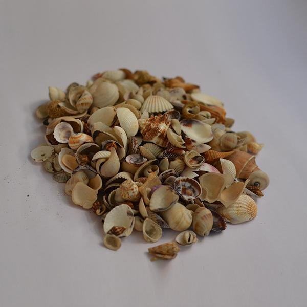 Mix Assorted Seashells - 1kg Pack
