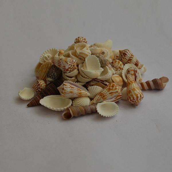 Mix Pattern Seashells - 1kg Pack - YesNo
