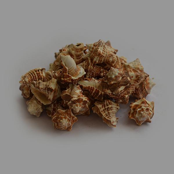 Pearl Oyster Seashell - 1kg Pack