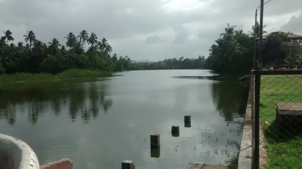 An isolated pond from the Vasai run