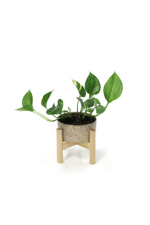 Wood Tabletop Planter - Coffee Bean
