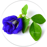 Dried Flowers - Butterfly Pea